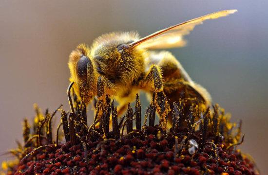 Honeybees Nesting Location
